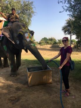 """watering"" my elephant"